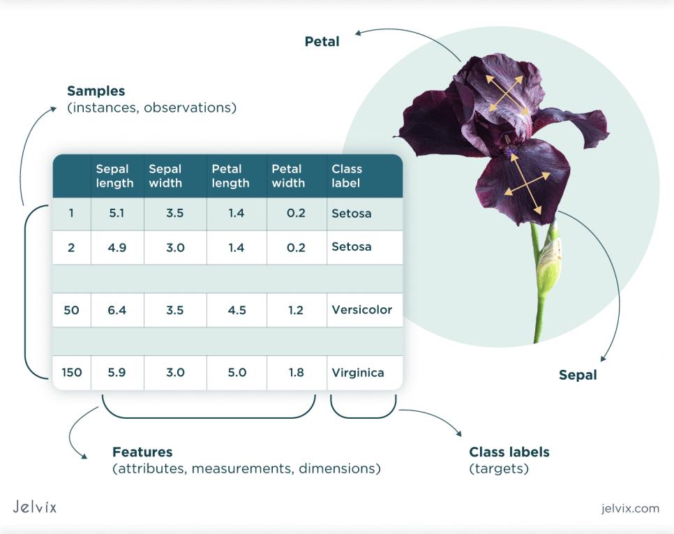 iris' petals
